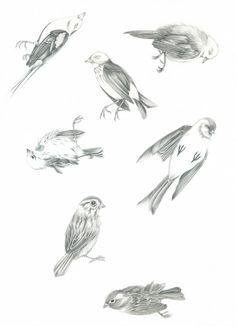 Birds, Kajsa Wallin, 30x40 cm