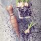 Planting dibble, trädgårdsredskap för plantering, i trä