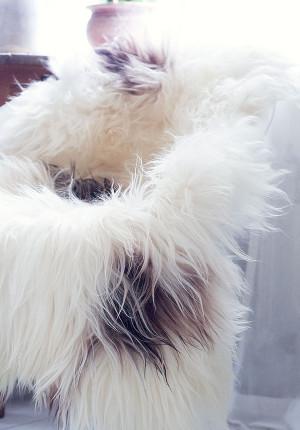 Vitt fårskinn, långhåriga isländska, vita med svarta fläckar.